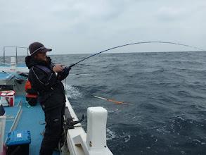 Photo: その後もサメに食われ続けます! その間隙を突いて!