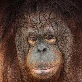 by Caraka Pamungkas - Animals Other Mammals