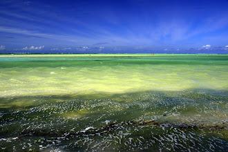 Photo: Conclusion : malgré ces images de rêve, je noterai Zanzibar 3/5 à cause du déficit culturel et de l'ambiance locale, et la Tanzanie de 4/5, toujours à cause de l'ambiance globale qui vient ternir la magie des safaris. Dommage. L'Afrique n'égale pas encore