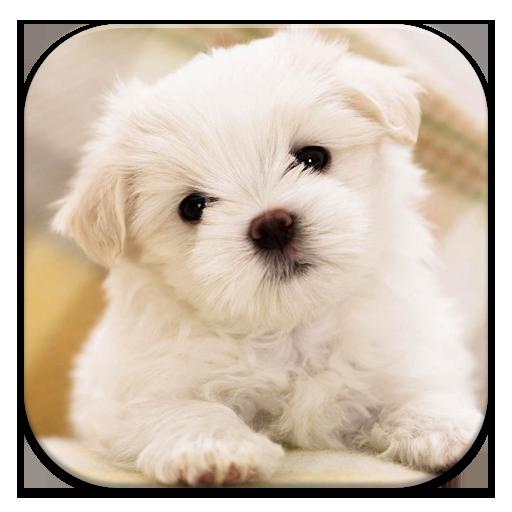 Dog Wallpaper (app)