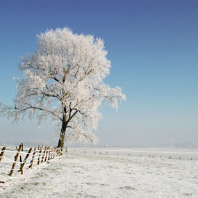 Snowy tree by Filip De Vos - Landscapes Weather