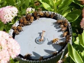Photo: Nourrissage des abeilles, la ronde !