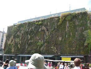 Photo: The vertical garden on the Avignon market building.  This year was dry and it did not bloom as profusely as usual.