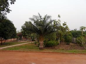 Photo: même le jardin potager