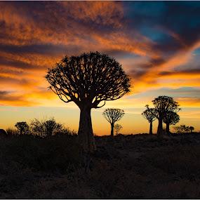 Namibia Sunset by Richard Ryan - Landscapes Deserts (  )