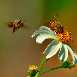 Feb 14 bees.jpg