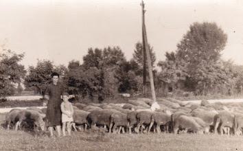 Photo: Domonkos Elekné Kopsa Irma és keresztfia Domonkos László (Domonkos Etus néni fia), az 1960-as évek első fele