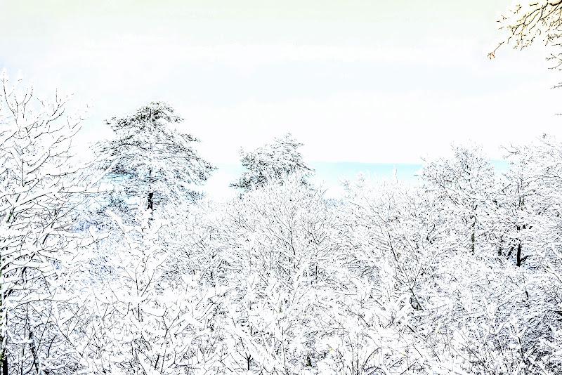 Primo sole dopo la neve di gianmichele_arrighetti