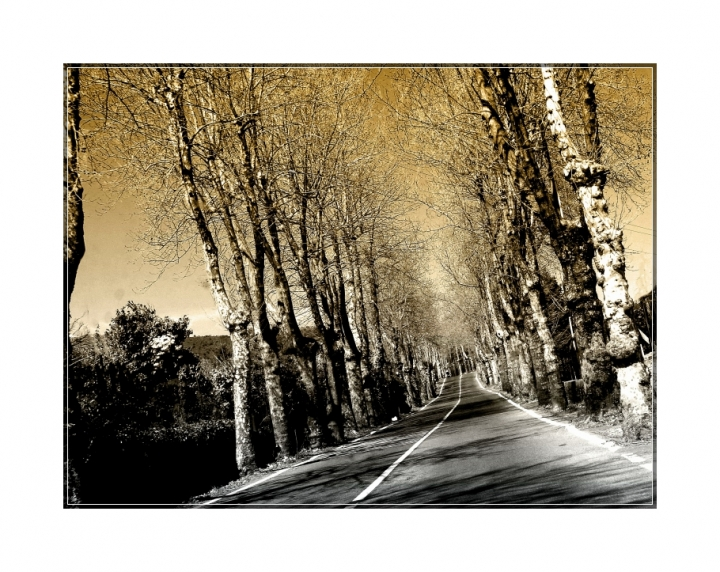The street trees di Giovanni Coccoli