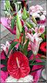 Photo: Floarea Flamingo- Anthurium - expusa pentru vanzare - pe Calea Victoriei - 2014.11.01 Album comum http://ana-maria-catalina.blogspot.ro/2017/05/plante-diverse-din-comert.html