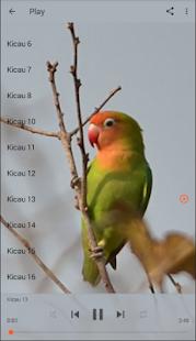 Master Kicau Lovebird - náhled