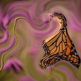 Mixed Up Monarch by Chris Cavallo - Digital Art Animals ( orange, purple flower, butterfly, digital art )