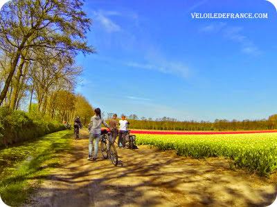 Champ de tulipe près de Leiden