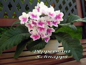 Photo: Peppermint Schnapps