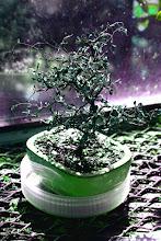 Photo: 049/366 - bonsai