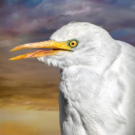 by Judy Rosanno - Animals Birds ( alamogordo, alameda park zoo, new mexico )