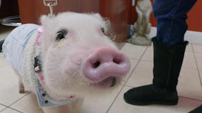 Oui, Oui... Piggie! thumbnail