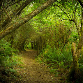 Into The Woods by Richard Saxon - Landscapes Forests ( oregon, green, green forests, oregon coast, forest, woods )