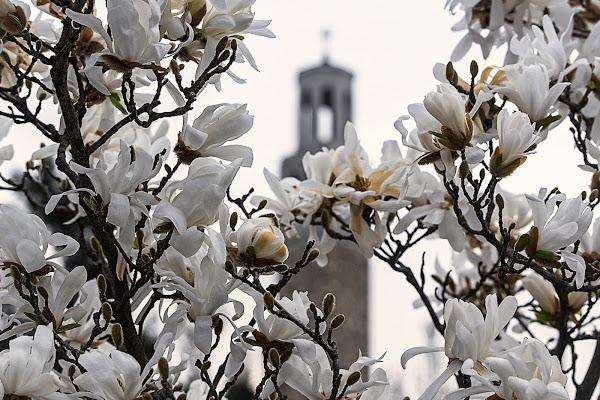 Primavera a Trieste di NinoZx21