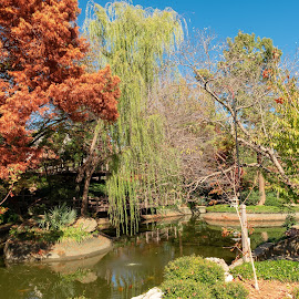 Pond by Bert Templeton - City,  Street & Park  City Parks ( pond, gardens, reflection, reflections, texas, water, trees, japanese, botanical, rocks, garden, lake, fort worth )