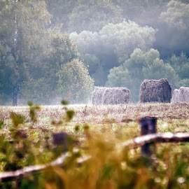 Morning, field by Vitaly Stasov - Novices Only Landscapes ( hay, at dawn, drops, sunlight, field, grass, dew, sun, summer, landscape, morning )