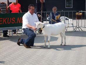 Photo: Klasse 2: witte lammeren geboren in januari 2013.  1e. Fay van de Dijk.