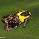 Yellow-vested Moth