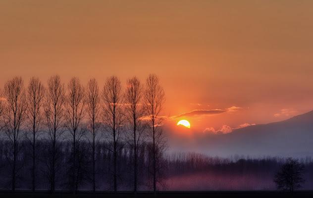 Silhouette d'inverno