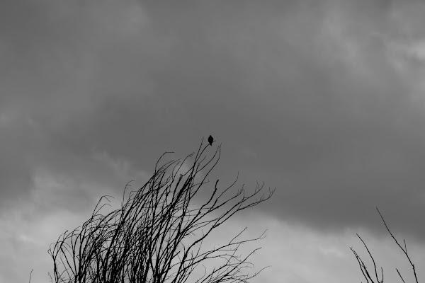...ascoltando il vento di Giovanni De Luca