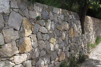 Photo: Muro a secco nuovo che ingloba una roverella
