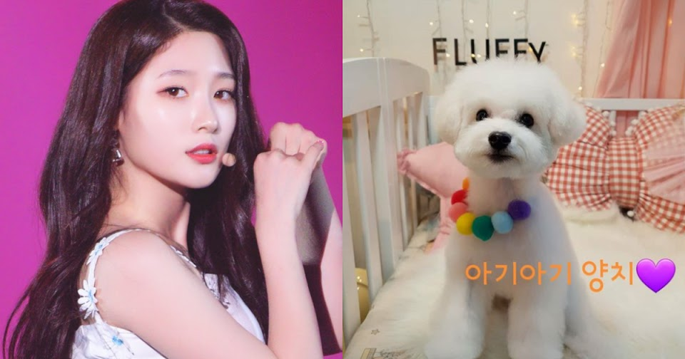 jung chae yeon puppy