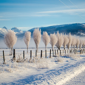 Grand Tetons over a Row of Willows by Chad Roberts - Landscapes Mountains & Hills ( winter, cold, snow, frost, frozen, morning, grand tetons,  )