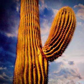 Cool Cacti by Anthony Balzarini - Nature Up Close Other plants ( #arizona, #nature, #photography, #desert, #cacti,  )