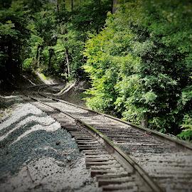 Into The Woods by Brant Stevenson - Transportation Railway Tracks
