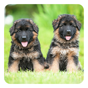 German Shepherds LWP