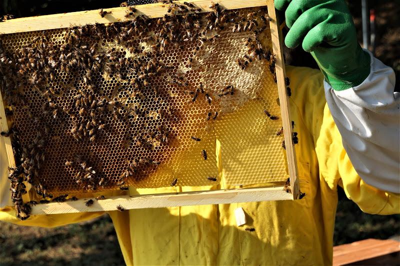 apicultore di gianni_vita