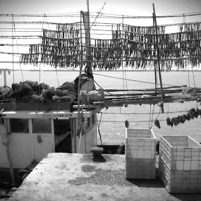 Bombay Ducks Hanged by Naveed Dadan - City,  Street & Park  Markets & Shops ( black and white, art, street, india, travel, people, portrait, man, photography, city )
