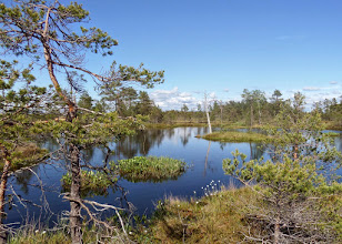 Photo: We walked over bogs and arrived at this swamp pool.