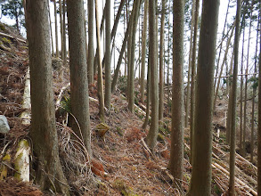 ここも倒木で歩きづらく