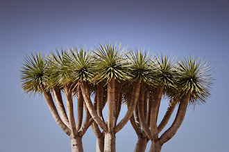 Photo: Tree in the Sky (Tenerife)