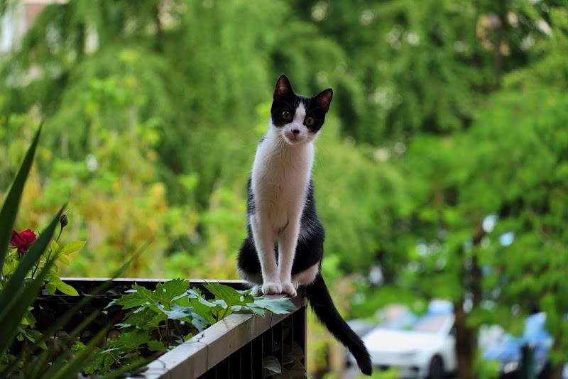 Ciao...Miao di Rivenri