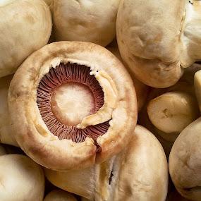 Mmmushrooms by Alex Cruceru - Food & Drink Ingredients