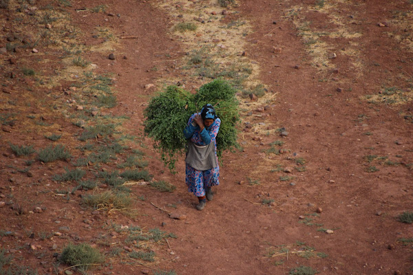 Vita berbera di CarlottaPep