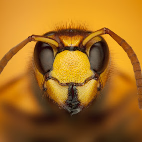 Horny by Tomáš Celar - Animals Insects & Spiders