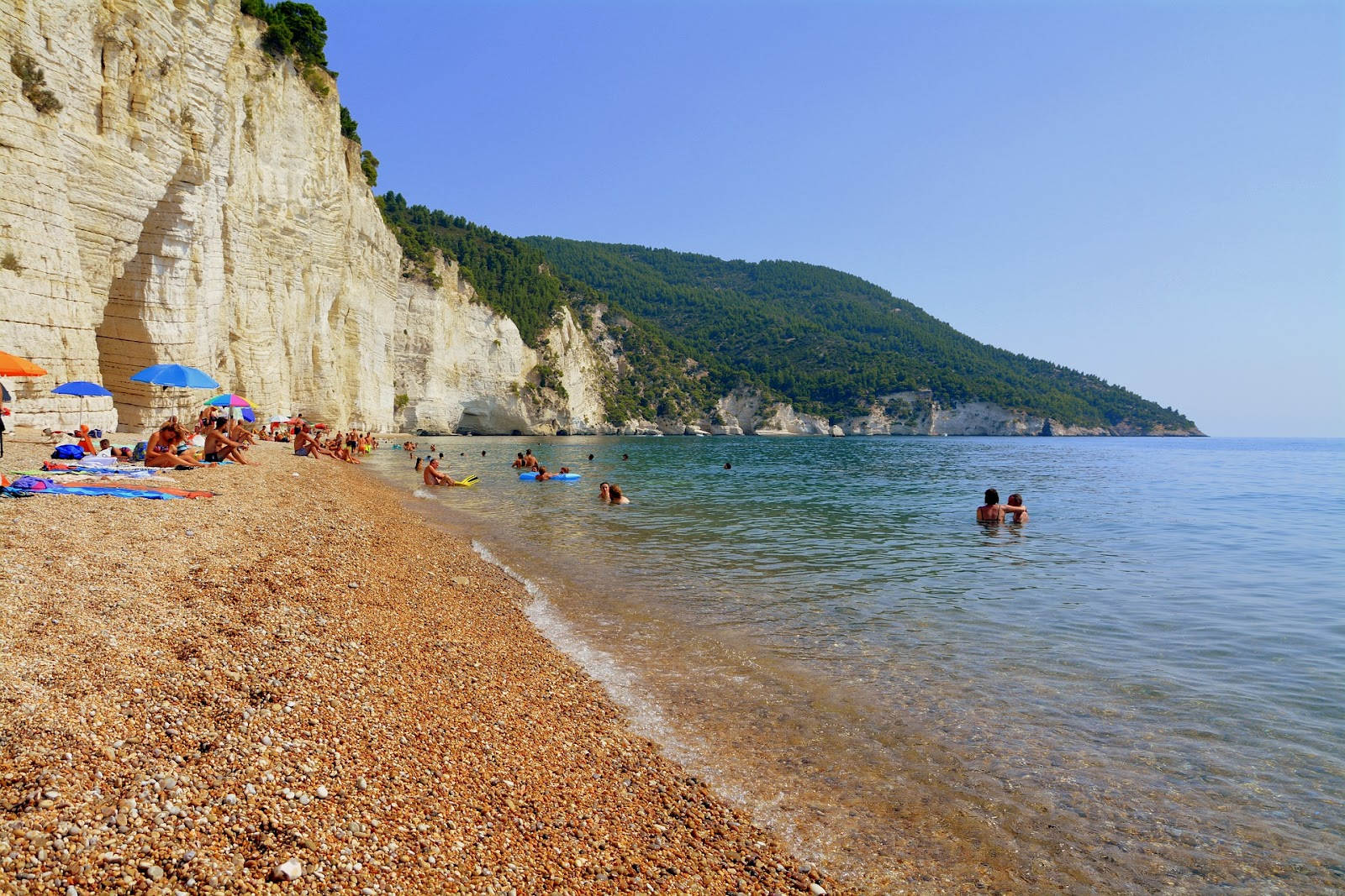 gargano pebble beach crystal clear sea white sandstone cliffs tourists swimming and sunbathing forest in background sunny day south of italy
