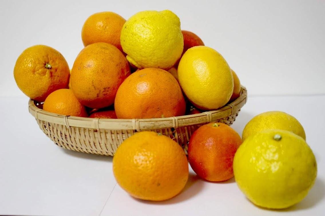 今シーズンの柑橘販売がすべて終了しました。