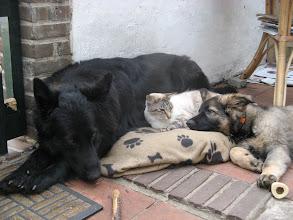 Photo: Heerlijk samen siesta doen