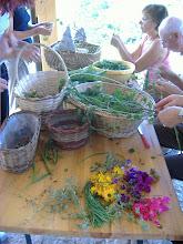 Photo: si curano le erbe appena raccolte