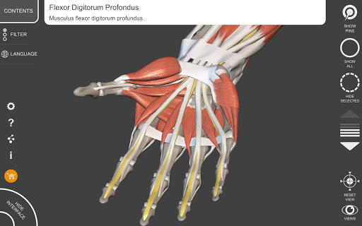 Muscle | Skeleton - 3D Anatomy 1.5.0 screenshots 9
