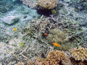 Photo: Coral Reef, Naigani Island, Fiji